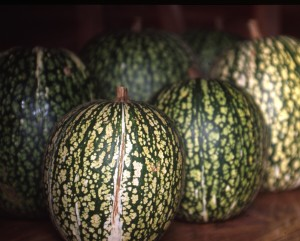 C. ficifolia gourds are sometimes Fig Leaf Gourds