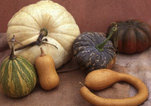 Still life image of winter squash belonging to the species Cucurbit moschata grown from seed at Sea Spring Seeds