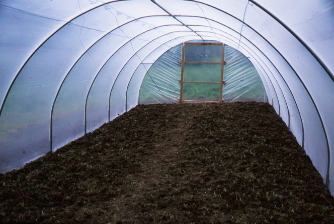 Using Polytunnels And Greenhouses