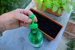 The simplest way to water young plants