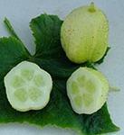 Crystal Lemon2-web6