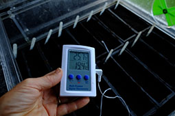 Using a digital thermometer to monitor the compost temperature in a propagator