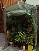 A plastic mini greenhouse