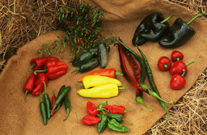 Range of fresh chillies being sold by Peppers by Post.