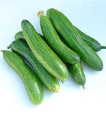 Cucumber var. La Diva
